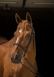 Thoroughbred Portrait, Off Track