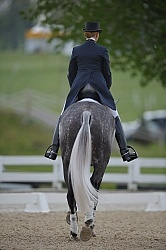 Dressage Dressage Warm Up