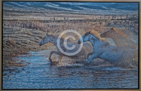 A Splashing We Will Go 23.5 x 36.5 Canvas Wrap Gold Frame LE to 40  850.00